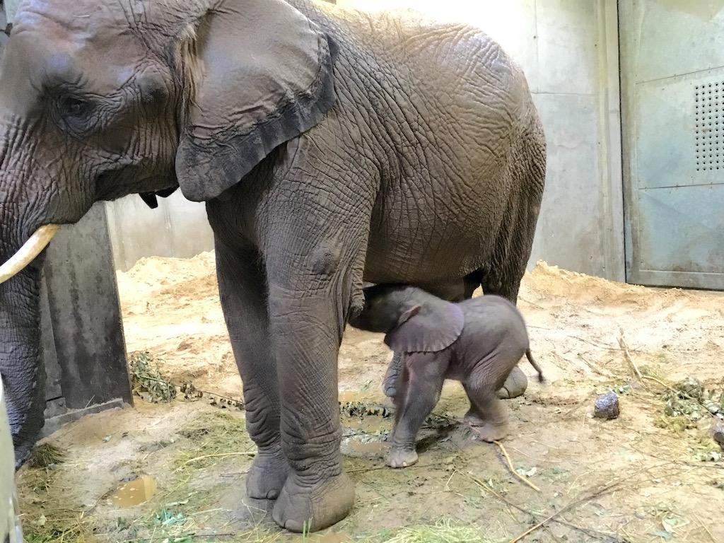 kleiner elefant ein geschenk f r die h ndelstadt halle bernd wiegand. Black Bedroom Furniture Sets. Home Design Ideas