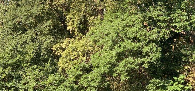 Unterstützung für Halles Bäume – Stadt plant Pflanzaktion am 3. Oktober